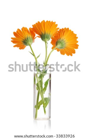 Orange flower in a vase with water