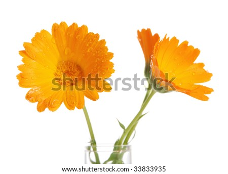 Orange flower in a vase with water