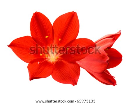Orange flower isolated on white