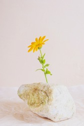 Orange flower on a stone, light pastel background. Tranquility concept.