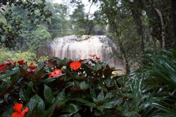 Orange flowers and waterfall.
