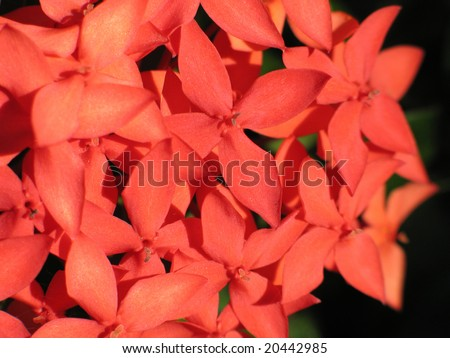orange flowers close-up #20442985