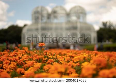 orange flowers field in front of jardim botanico de Curitiba Foto stock ©