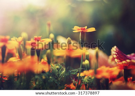 orange flowers in garden...