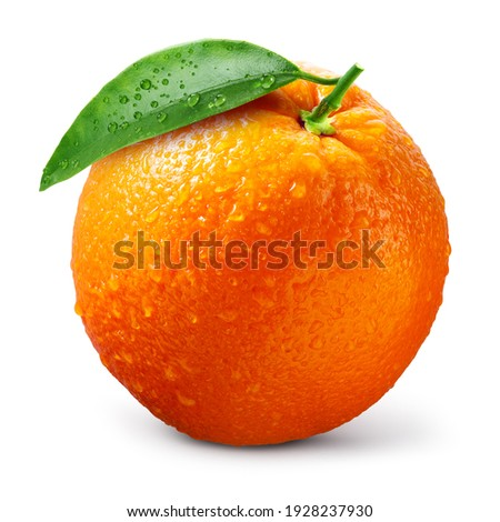 Orange fruit isolate. Orange citrus with drops on white background. Whole wet orange fruit with leaves. Full depth of field.