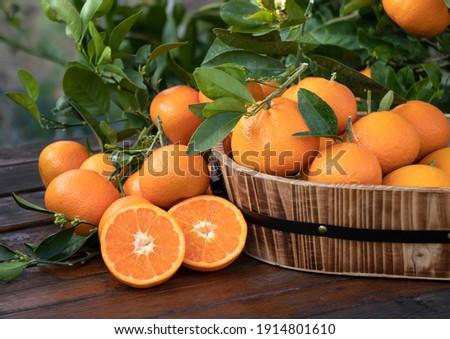 Orange fruit with green leaves on the  wood.  Home gardening. Mandarine oranges. Tangerine  oranges. Orange color. Fresh orange juice.