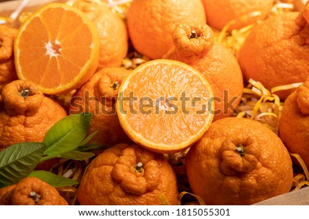 Orange fruit with orange slices and leaves in Wooden box, Dekopon orange or sumo mandarin tangerine with leaves in box packaging.