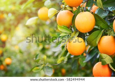Orange garden #582494944