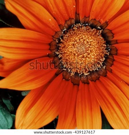 Orange Garden Flower #439127617