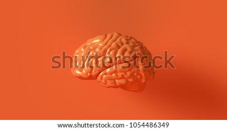 Orange Human brain Anatomical Model 3d illustration
