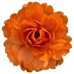 Orange isolaed flower