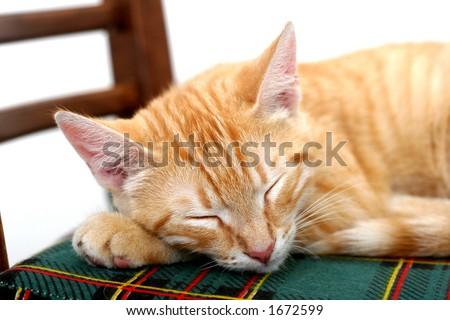 Orange kitten sleeping on the chair