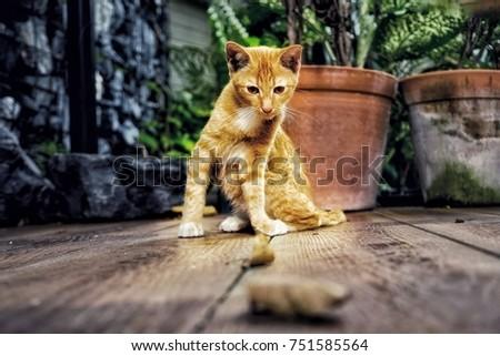 Orange kitty cat #751585564