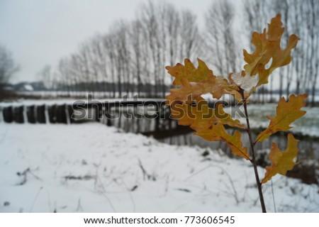 Stock Photo Orange leaves in front of Roman bridge with snow