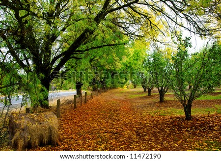 Orange Leaves scattered on ground in an orchard