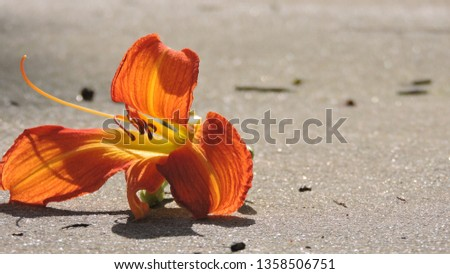 Orange Lily bathing in the Sunlight on a glistening surface.