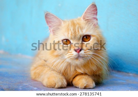 Orange little cat on the isolated background
