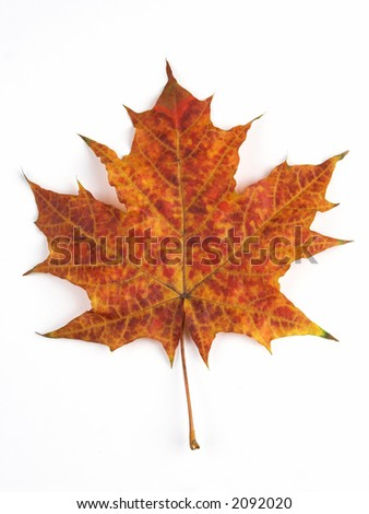 Orange maple leaf, a symbol of autumn