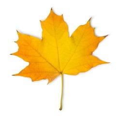 Orange maple leaf isolated on a white background