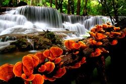 Orange mushroom with waterfalls