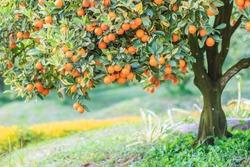 Orange on the tree and Orange Park