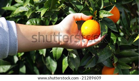 Orange on tree.