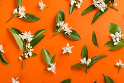 Orange paper background with orange blossom tree branches. Top view.