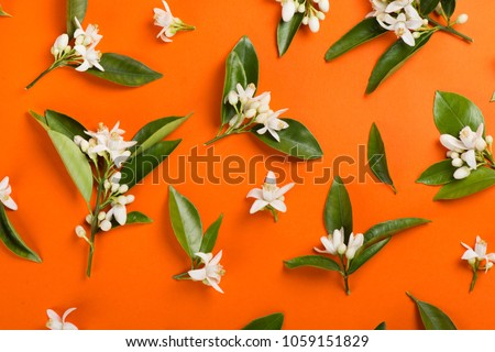 Orange paper background with orange blossom tree branches. Top view. #1059151829