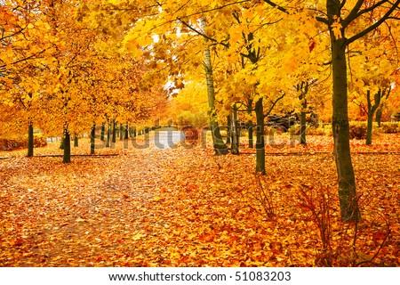 orange park - stock photo