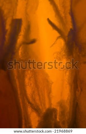 Orange peel closeup photographed with macro lens