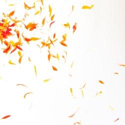 Orange petals flying down on red