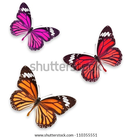 Orange pink and Red butterflies isolated on white with soft shadow beneath each