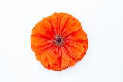 Orange poppy flower on a white background top view