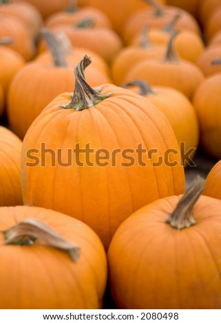 Orange pumkins, the largest one in the middle in focus