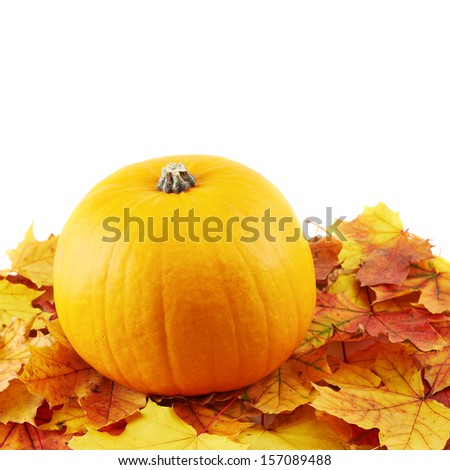 Orange pumpkin against turned yellow maple-leaf leaves composition isolated over white as a autumn Halloween copyspace background