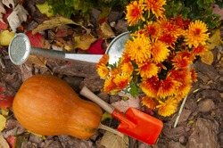 orange pumpkin, watering can with chrysanthemums and children paddle in the garden in the fall