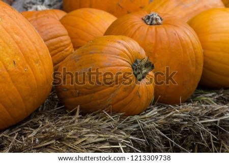 Orange pumpkins for Halloween Party #1213309738