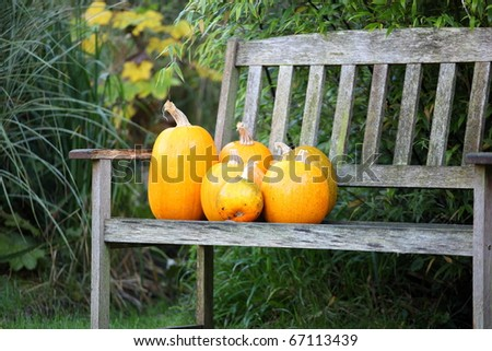 orange pumpkins on a wooden bench in the garden