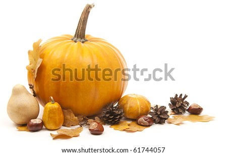 orange pumpkins with chesnuts for halloween decoration