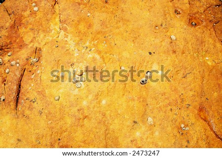 Orange rock with rich texture and shell detail