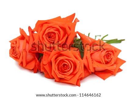 orange roses over white
