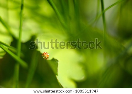 Stock Photo Orange spotted bug in grass. Defocused, blurred background