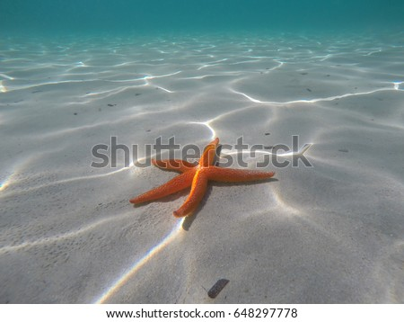 Orange starfish near the shore in a turquoise water #648297778