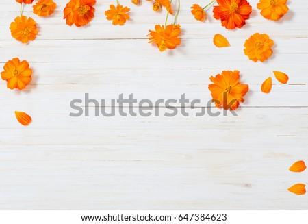 orange summer flowers on white wooden background #647384623