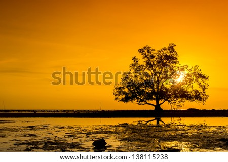 orange sunset via tree silhouette