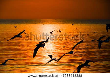 Seagulls flying back on sunset  Images and Stock Photos - Avopix com