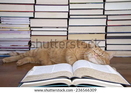 Orange Tabby Cat appearing to read a book with piles of books in the background. gave up and is now sleeping on the book