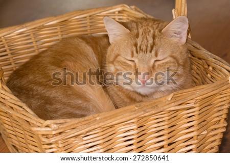 stock-photo-orange-tabby-cat-happily-sleeping-in-a-wicker-basket-272850641.jpg