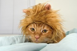 Orange tabby cat in lion head costume on bed