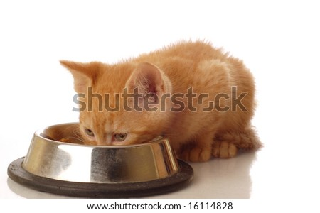 orange tabby kitten eating out of food dish